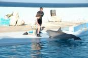 Delfinárium Sliema Malta