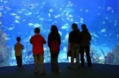 Exkurze studentů LAL Torbay do akvária