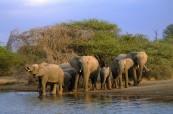 K Africe patří sloni, LAL Travelling Classroom