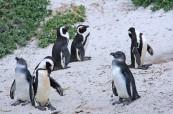 Tučňáci, LAL Travelling Classroom